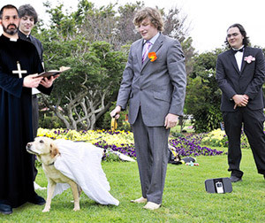 dog-marriage