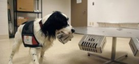 Dogs Can Sniff Out Certain Cancers
