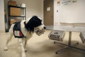 Study Claims Dogs Can Sniff out Certain Cancers