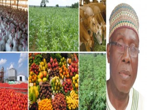 DIVERSIFICATION: How Agric Sector Can Bounce Back As Mainstay Of Nigeria's Economy