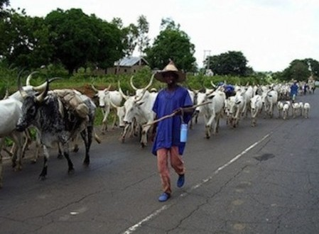 Herdsmen Killings: NEC working group recommends ranching in five states
