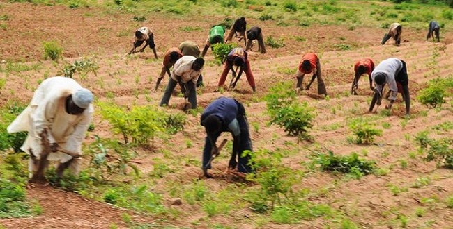 Farmers To Get Four Million Bags Of Fertilisers – Presidency